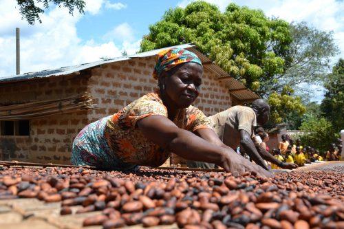 Frau beim Trocknen von Kakaobohnen