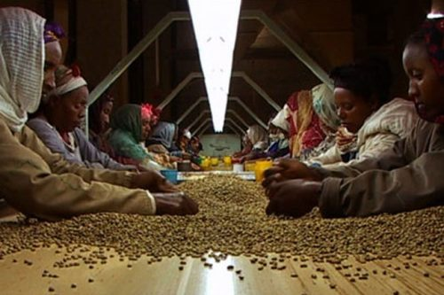 Frauen arbeiten in der Kaffeeindustrie.