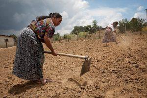 Bäuerinnen in Mittelamerika kämpfen beim Anbau gegen Dürre