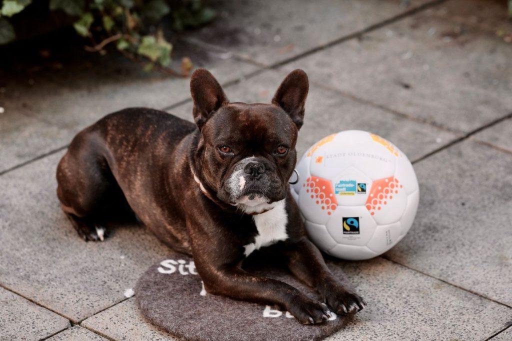 Hund mit fairem Fußball neben sich. Foto: © J. Bädeker